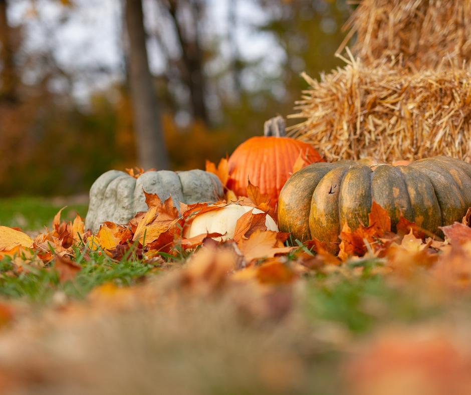 gratitude past thanksgiving